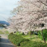 週間損益 +50万円 お花見とアーリーリタイアは早い内が花 (17/4/3~4/7)