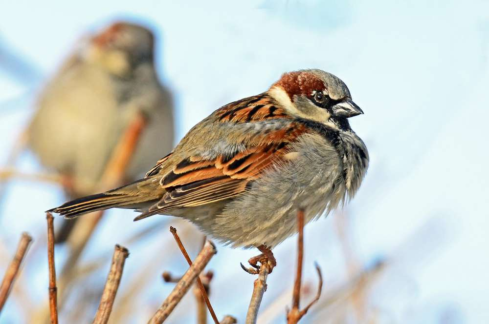 Sparrow on a Cold Winters Day