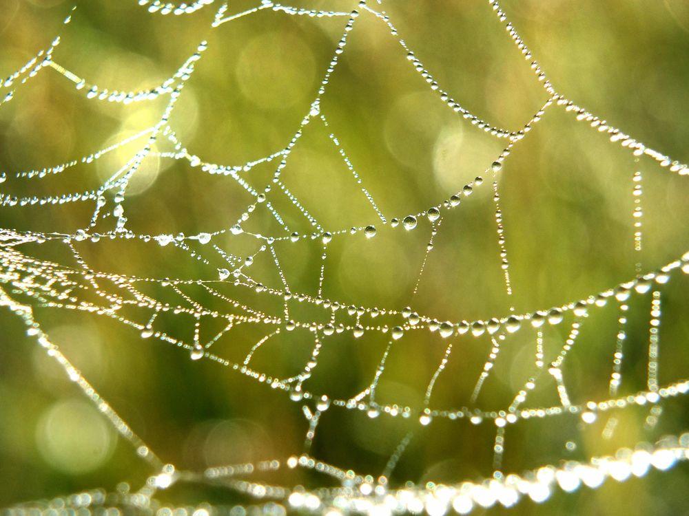 web-dewdrops-2.jpg